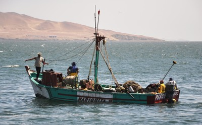 Anchovy boat with catch